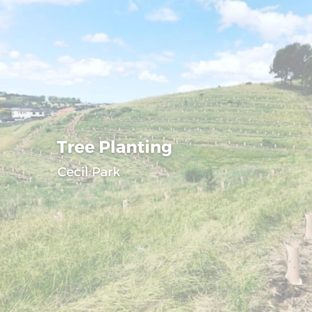 Cecil Park - Tree Planting